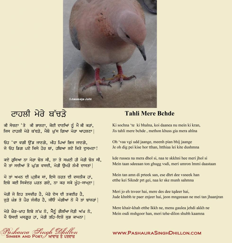 Tahli Mere Thachray Punjabi Poem by Pashaura Singh Dhillon